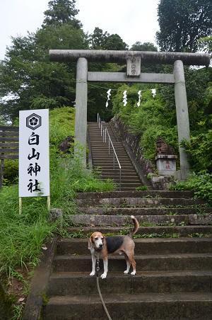 20180809八王子白山神社02