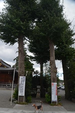 20180908亀ヶ池八幡宮05
