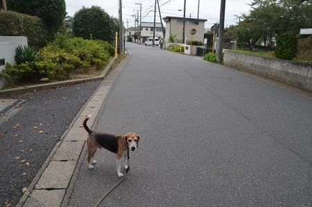 20180916弥勒八幡神社01