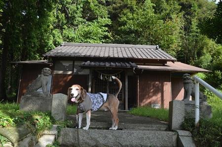 20180923佐貫日枝神社05