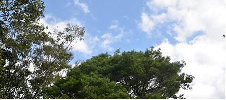 20180923鶴峯八幡神社36