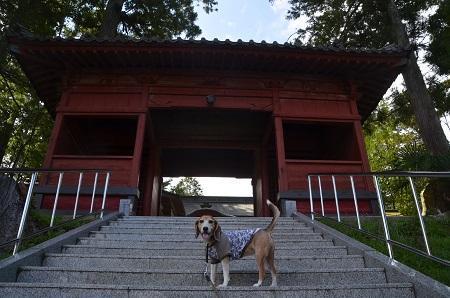 20180923久留里神社10