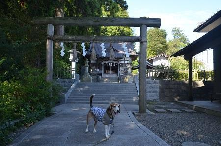 20180923六手八幡神社10