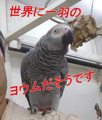 22_世界に一羽