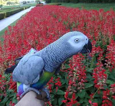 9_赤い花