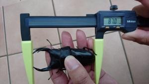 17YGBJA1-2 870mm