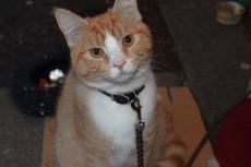 04猫映画2本、「猫なんてよんでもこない」と「ボブという名の猫」