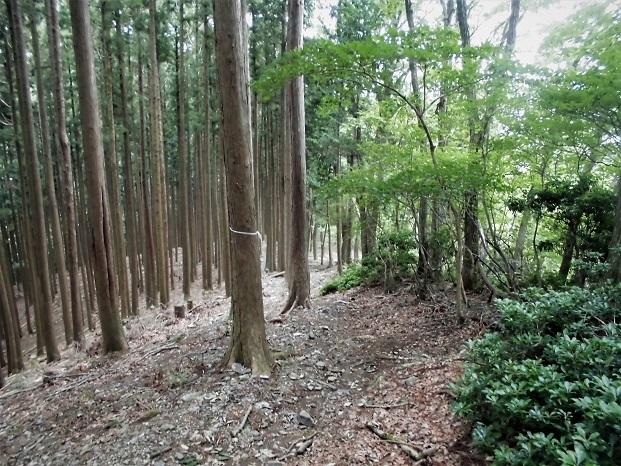18.8.31 棒ノ峰  (76)
