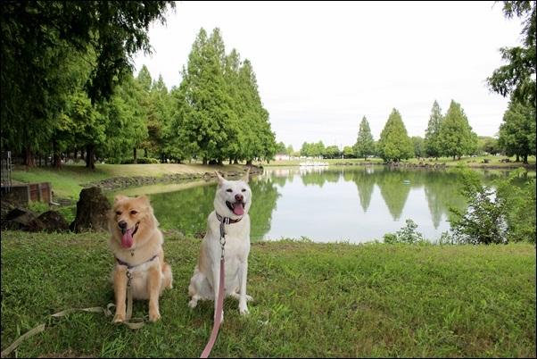 035加須水上公園