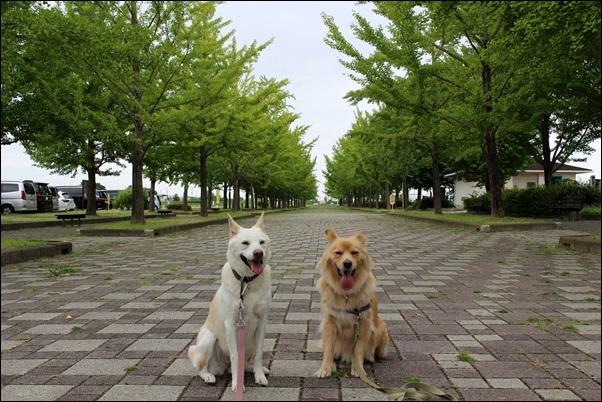 089加須水上公園