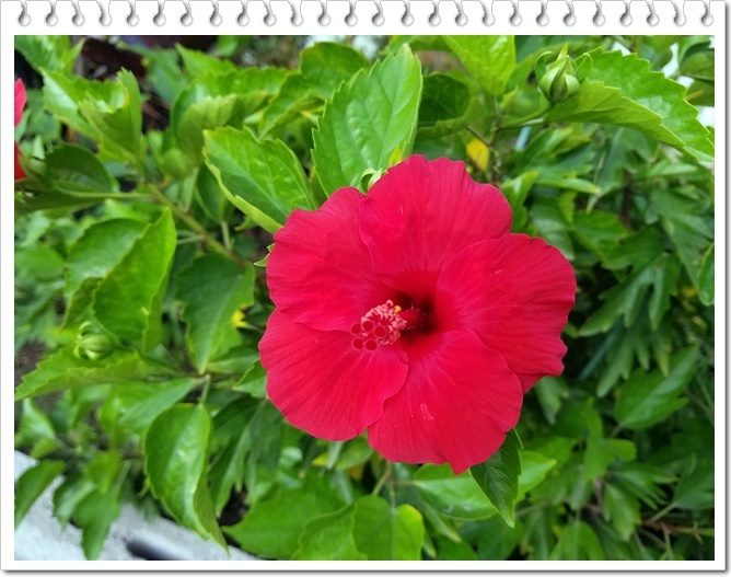 夏らしい花