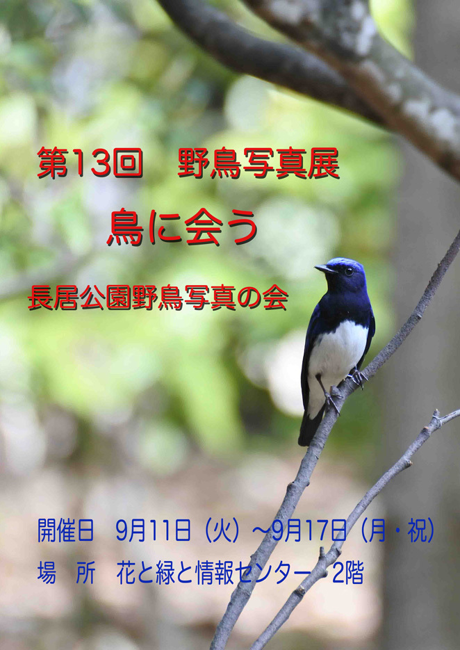 DSC_9700_edited-1.jpg