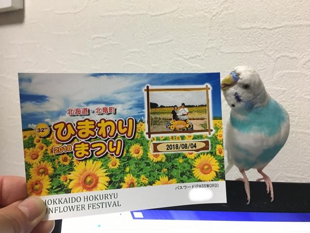 セキセイインコ インコ ひまわり 空色のセキセイ 珠霞 北竜町 ひまわりの里 写真 記念写真
