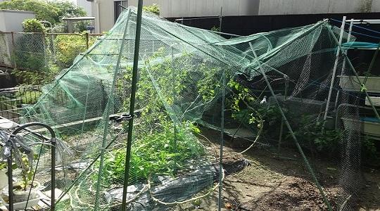 倒壊した裏庭菜園