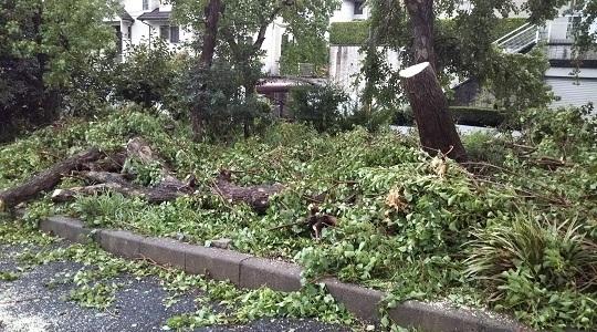 幹折れで道を封鎖した街路樹