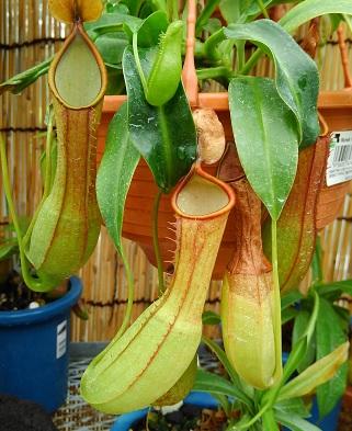 19食虫植物