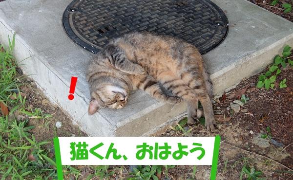! 「猫くん、おはよう」