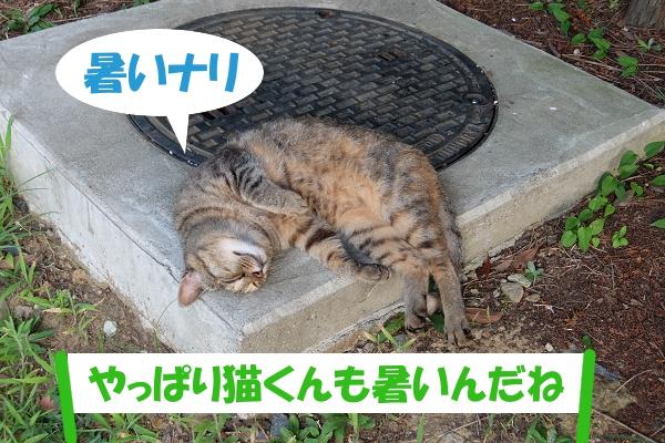 暑いナリ 「やっぱり猫くんも暑いんだね」