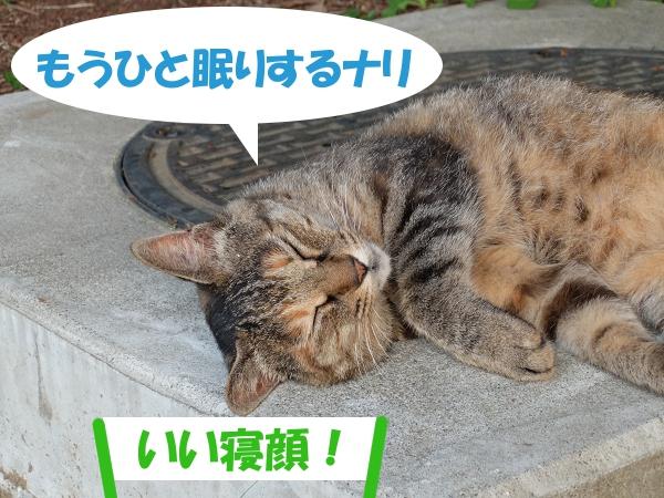 もうひと眠りするナリ 「いい寝顔!」