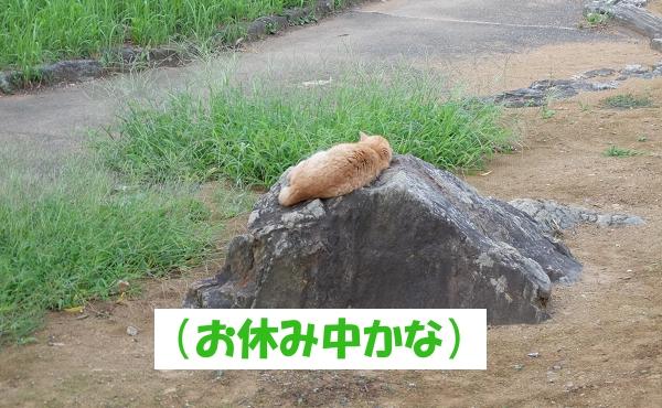(お休み中かな)