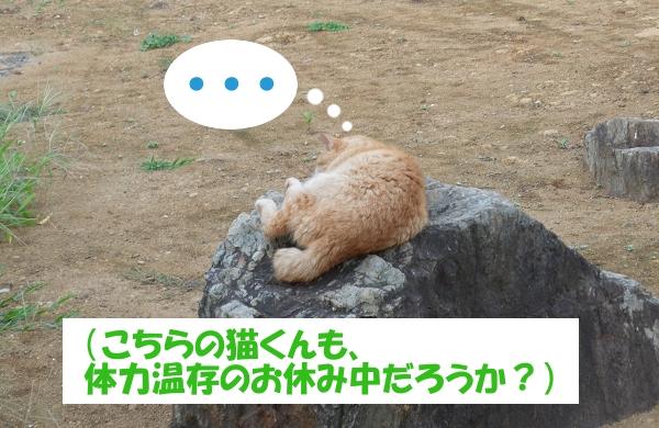 ・・・(こちらの猫くんも、体力温存のお休み中だろうか?)