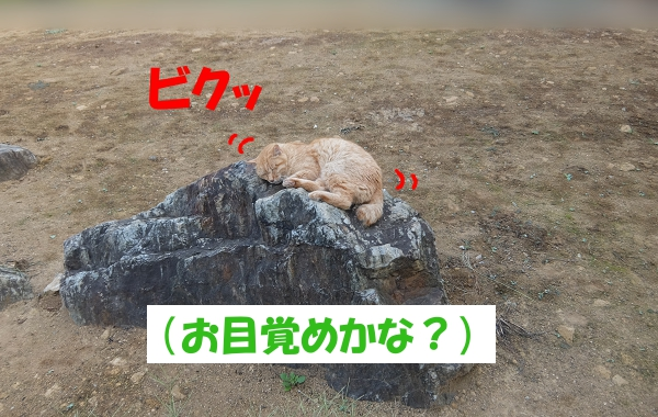 """""""ビクッ"""" (お目覚めかな?)"""