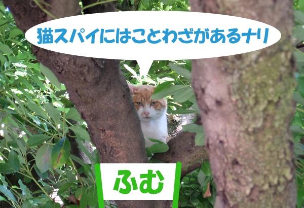 猫スパイにはことわざがあるナリ 「ふむ」
