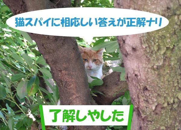 猫スパイに相応しい答えが正解ナリ 「了解しやした」