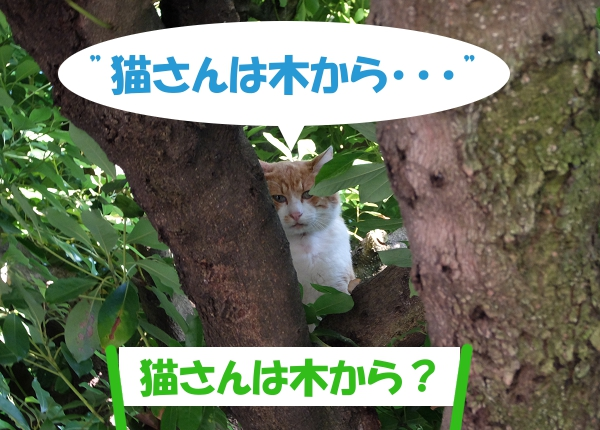 猫さんは木から・・・ 「猫さんは木から?」