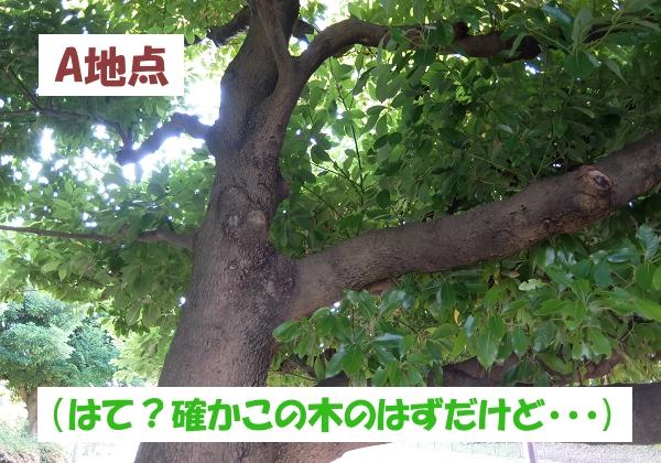A地点(はて?確かこの木のはずだけど・・・)