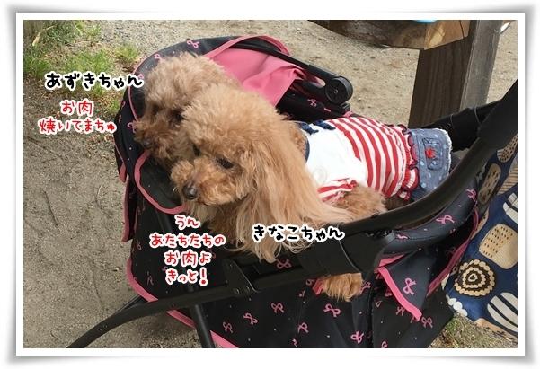 IMG_4379_1.jpg