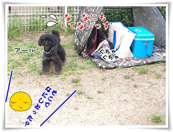 IMG_4381_1.jpg