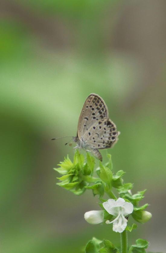 蝶々-844