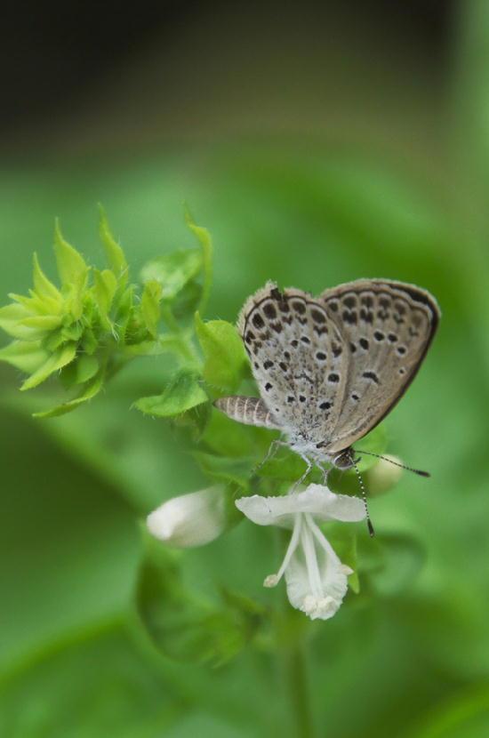 蝶々-846