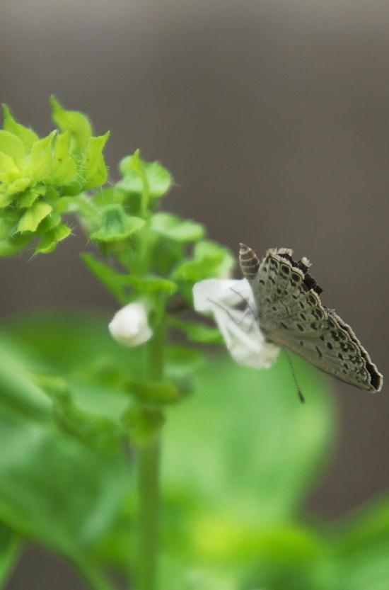 蝶々-848