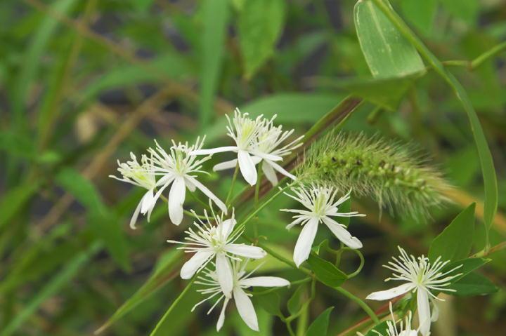 白い花-109