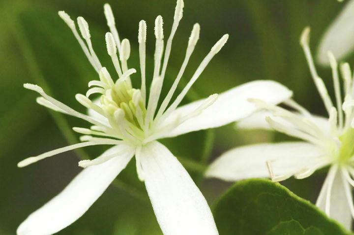 白い花-112