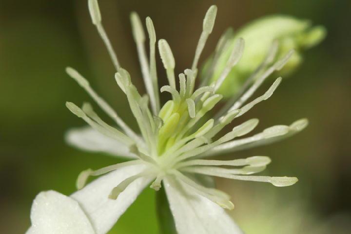 白い花-124