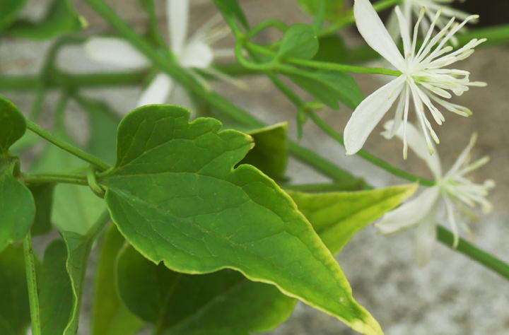 白い花-128