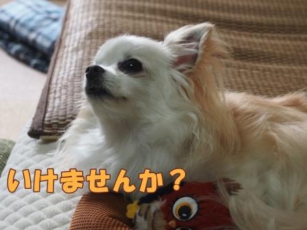 blogb028a.jpg