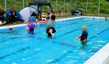 水泳選手犬 小梅