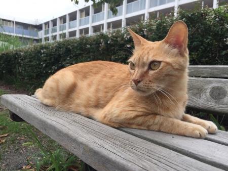 菱沼海岸4丁目失踪猫