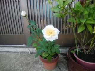 blog180830_6.jpg