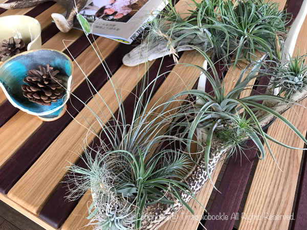 201809Airplants-2.jpg