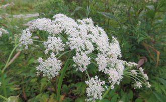 015白い花