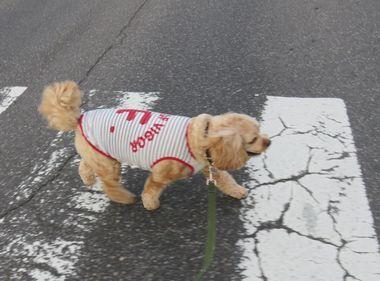 001横断歩道