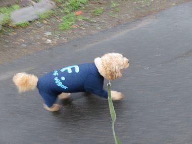 001小雨散歩