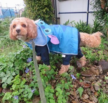 005雨散歩