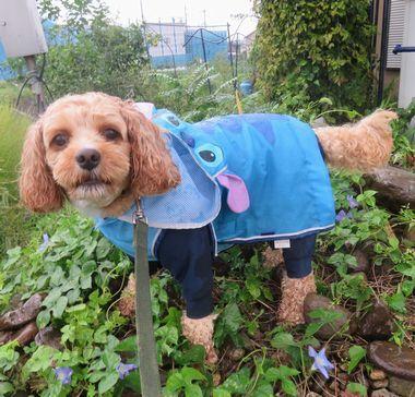 006雨散歩