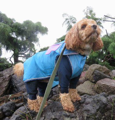 012雨散歩